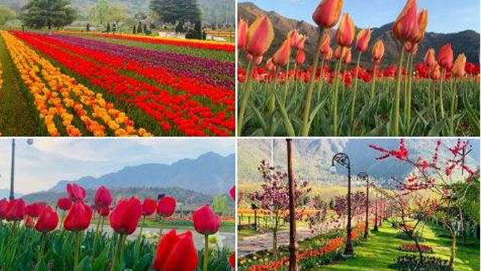 J-k's Tulip lawn to be thrown open for traffic